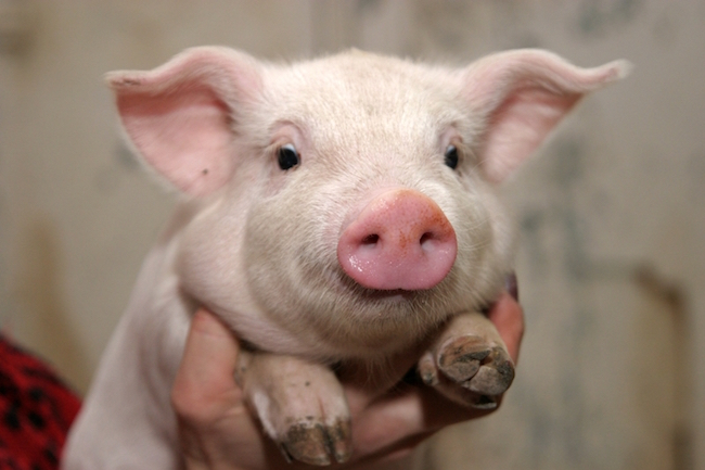 连跌5个月!猪肉价格同比已经跌超30% 逼近自繁自养成本线