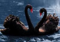 欧洲下一只黑天鹅在哪里?
