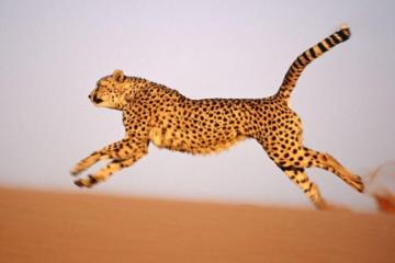 猎豹移动三季报:净利同比猛增122.5%,盘前股价大涨12%