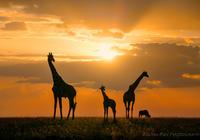 被上帝遗弃的非洲 如今将终迎曙光?
